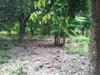 Venta de Terrenos en LA PAZ, COMALAPA